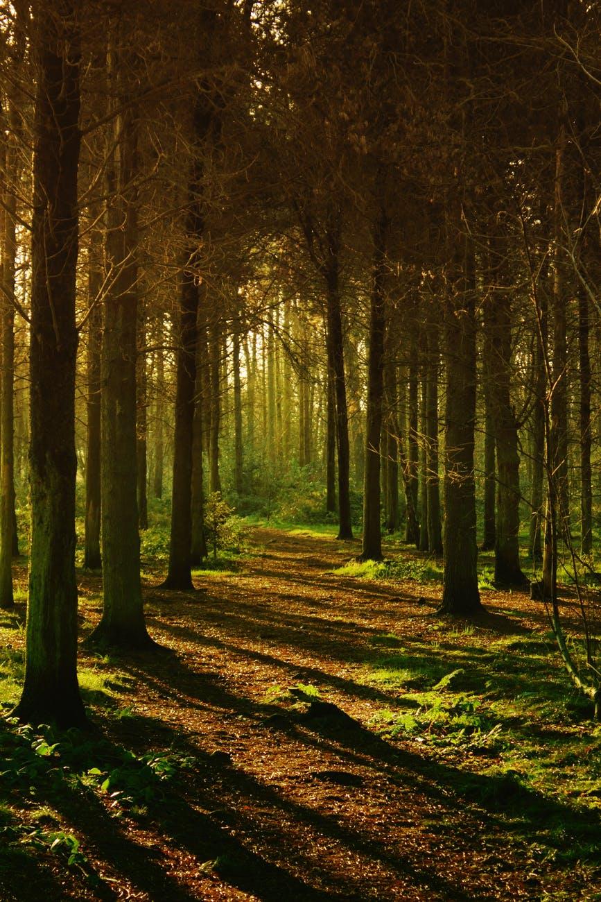 brown colour dawn environment